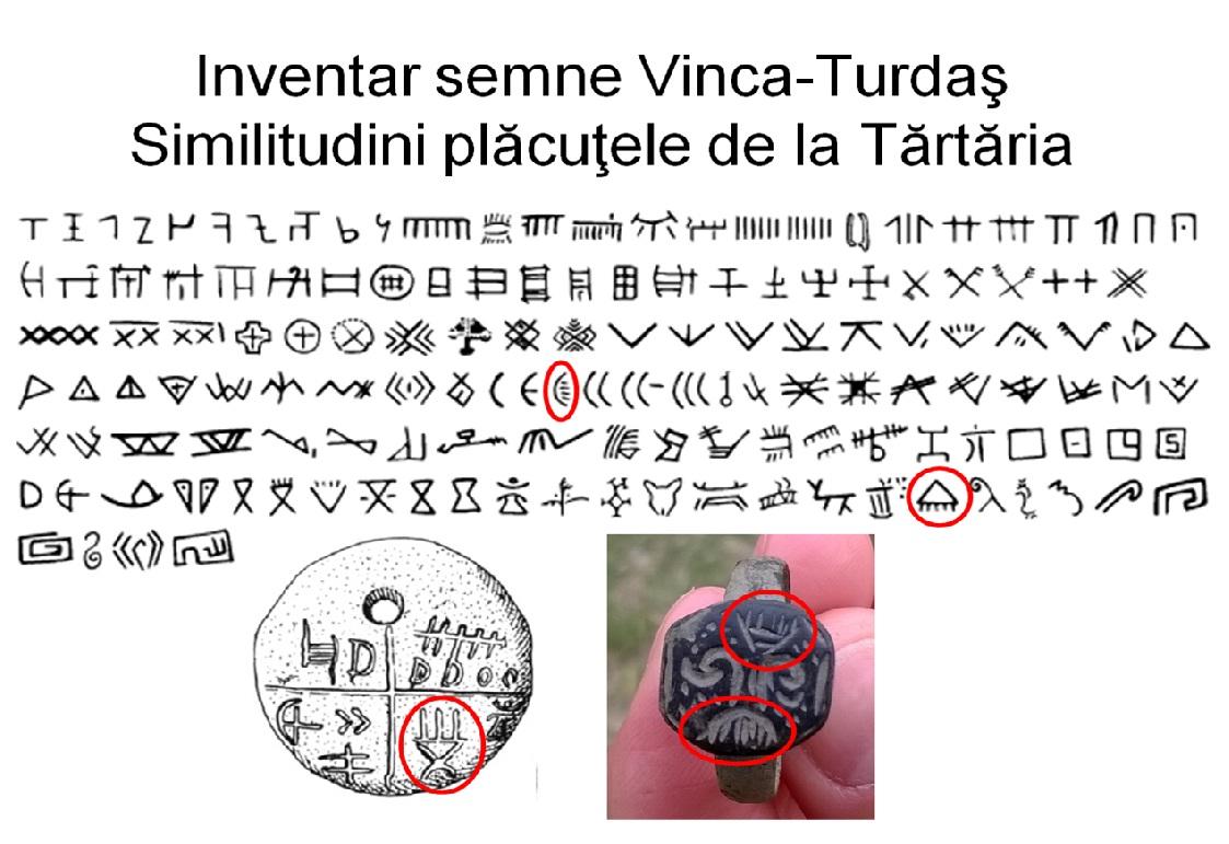 Comparatie Vinca-Turdas